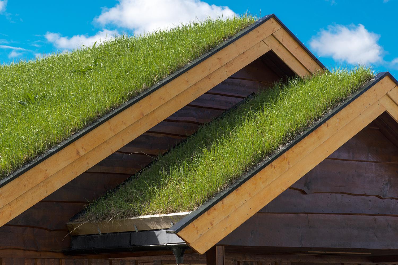 Zelené střechy: Jak na ně a proč je všichni chtějí?